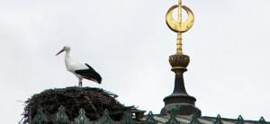 Storch und Halbmond